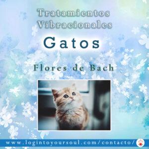 flores bach gatos